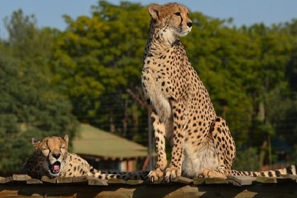 Zoo and Wildlife Parks in Bloemfontein